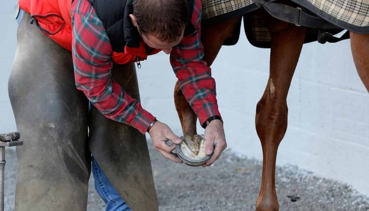 Everything About Horse Hooves 2