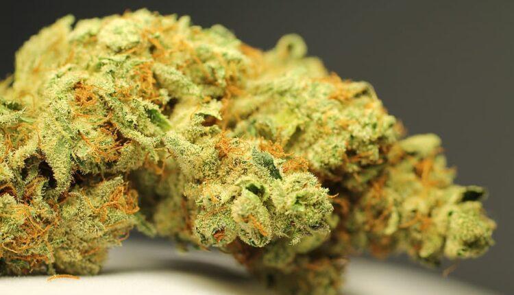 Medical Marijuana2]