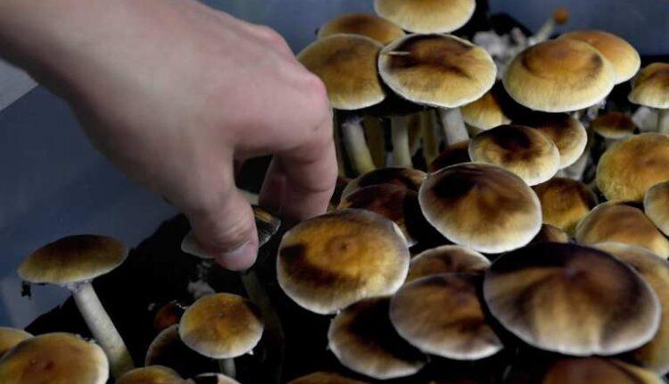 Magical Mushroom